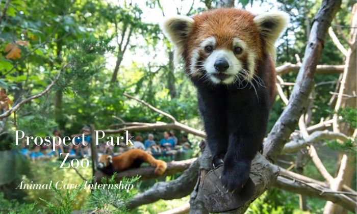 Prospect Park Zoo Animal Care Internship