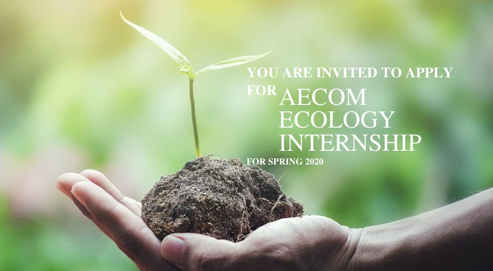 Aecom Ecology Internship for Spring 2020