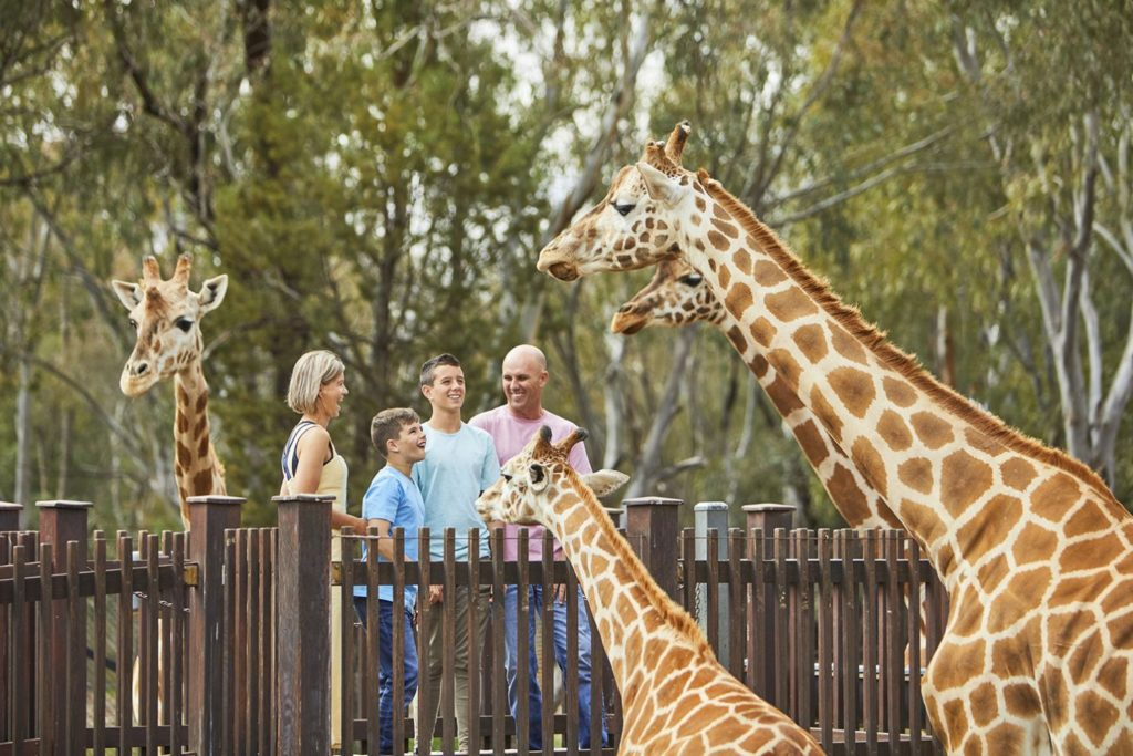 Greenville Zoo's Education Department Internship